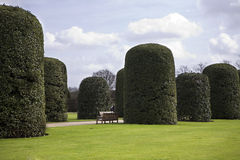 Pollard trees in Hyde-park. Green hedgerow fence with pollard trees in Hyde-park. London Royalty Free Stock Photo