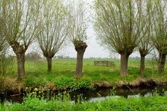 Pollard-Weiden in der Landschaft Stockfotografie
