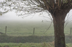 Pollard willow and a small world. A thick fog over the frozen grassland makes the view limited and mysterious Royalty Free Stock Image