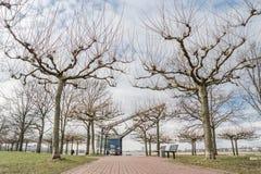 Pollard willow tree and crane Stock Image