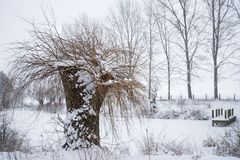 Pollard willow tree in the snow on a frozen pond with a wooden j. Etty, beautiful winter landscape Royalty Free Stock Images