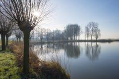 Pollard willows along the shore of a lake Royalty Free Stock Image