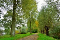 Pollard willows on a belgian pedestrian road Royalty Free Stock Photography