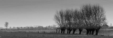 Pollardpilar i Flanders fält royaltyfri foto