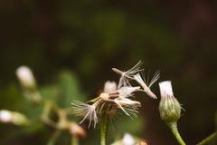 pollen Obrazy Royalty Free