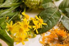 pollen Zdjęcie Royalty Free
