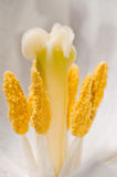 pollen zdjęcia stock