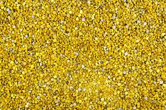 Pollen Fotografia Stock