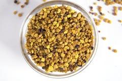pollen Royaltyfria Bilder