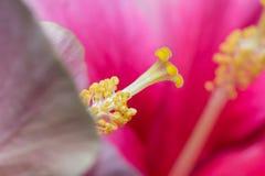 pollen Images stock
