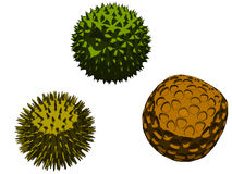 Pollen. Vector illustration of different pollen Royalty Free Stock Photography