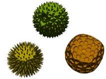 Pollen. Vector illustration of different pollen vector illustration
