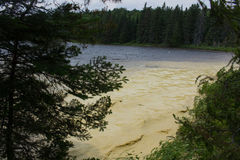 Pollen in Algonquin Park Royalty Free Stock Photography