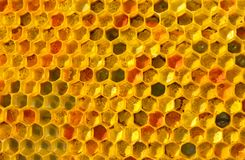 Pollen bees placed in cells. Bee pollen is filled with honey. This forms a ambrosia royalty free stock photos