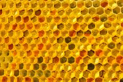 Pollen bees placed in cells. Bee pollen is filled with honey. This forms a ambrosia stock photos