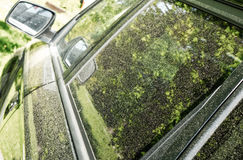Pollen on car. Close up view royalty free stock photos
