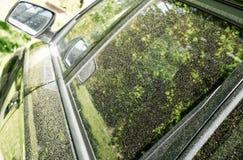 Pollen on car Royalty Free Stock Photos