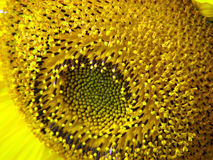 Pollen Circle. A beautiful circular design of pollens for a background Stock Image