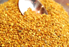 Pollen d'abeille image stock