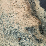 Pollen de bouleau sur la terre humide après pluie Image libre de droits