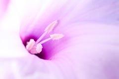 Pollen du ` s de fleur de plan rapproché Photos libres de droits