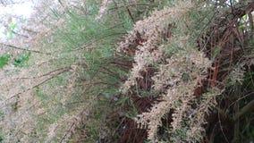 Pollen et arbre clips vidéos