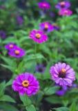 Pollen flower Stock Photo