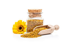 Pollen granules Stock Images
