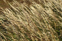 Pollen and grasses Stock Image