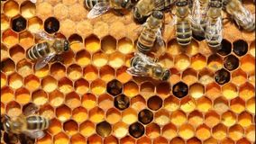 Pollen, honey and bees. stock video
