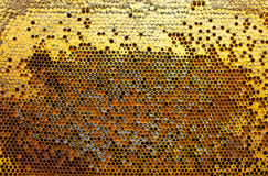Pollen, nectar and honey in combs Stock Photo