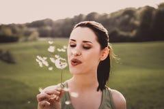 Pollen od trawy, dandelion zdjęcie stock
