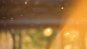 Pollen på vårsolnedgång lager videofilmer