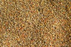 Pollen Royalty Free Stock Photos