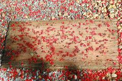 Red fall pollen scattered on the gravel and stone blocks. Selective focus. Pollen red fall spread on the area is gravel and floor stone blocks. Selective focus stock photo