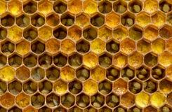 Pollen se renversant de miel Photographie stock