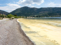 Pollen  Slick. Vast pollen slick (pollen scum phenomenon) floating on shore, Gulf of Corinth,  Greece,  caused by excessive late spring pollen production Royalty Free Stock Photo