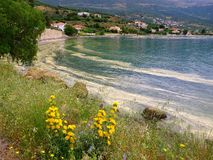 Pollen  Slick. Vast yellow pollen slick (pollen scum phenomenon) floating on shore, Gulf of Corinth,  Greece,  caused by excessive late spring pollen production Stock Image