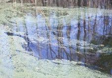 Pollen Unosi się na powierzchni jezioro Zdjęcia Stock