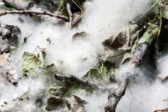 Pollen w poroślu Obrazy Royalty Free
