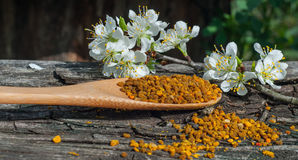 Pollen in a wooden spoon Stock Photo