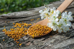 Pollen in a wooden spoon Royalty Free Stock Photography