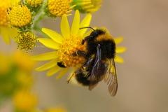 Pollenation lizenzfreie stockfotos
