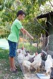 Polli d'alimentazione del ragazzo di paese fotografie stock libere da diritti
