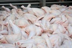 Polli da arrosto grezzi del pollo Fotografia Stock