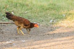 Polli del bambino e della madre Fotografie Stock