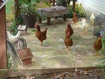 Polli sul portico Fotografie Stock