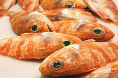 Pollicos. On display in a fish market in Spain Stock Photos