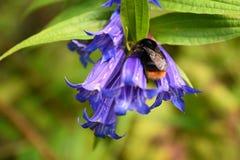 pollinate lizenzfreie stockfotos