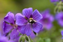 Pollinating Stock Image